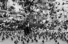 Ejercito de palomas